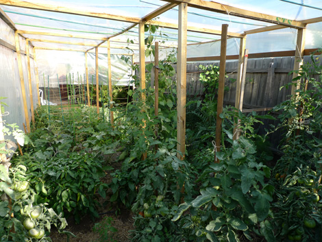 Backyard vegetable garden, Aberfeldie